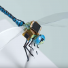 Dragonfly drones