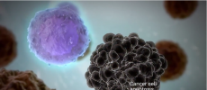 The mechanism works on a variety of rapidly proliferating human cells. (YouTube)