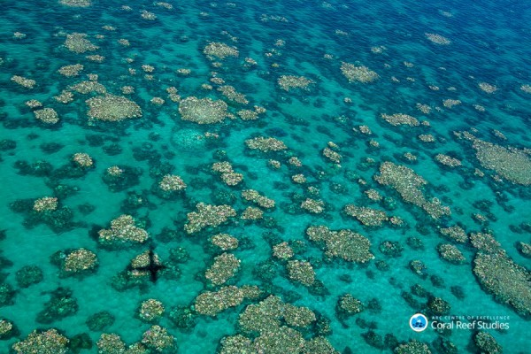 The Great Barrier Reef is located in the northeastern coast of Australia and is also considered as a UNESCO World Heritage site. (Ed Roberts/ARC Coral Reef Studies)