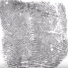 A human fingerprint is displayed for identification.