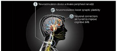 The main goal of the Targeted Neuroplasticity Training (TNT) program is to understand the basic mechanisms linking neurostimulation to plasticity.