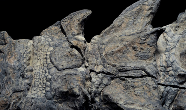 Very Well Preserved Dinosaur Fossil Is The Best The World Has Ever Seen