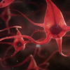 The newly discovered neuron plays an important role in the ability of humans to navigate environment. (YouTube)