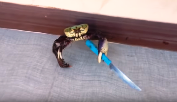 Crab-holding Knife Video